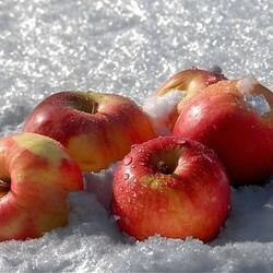 Пазл онлайн: Яблоки на снегу