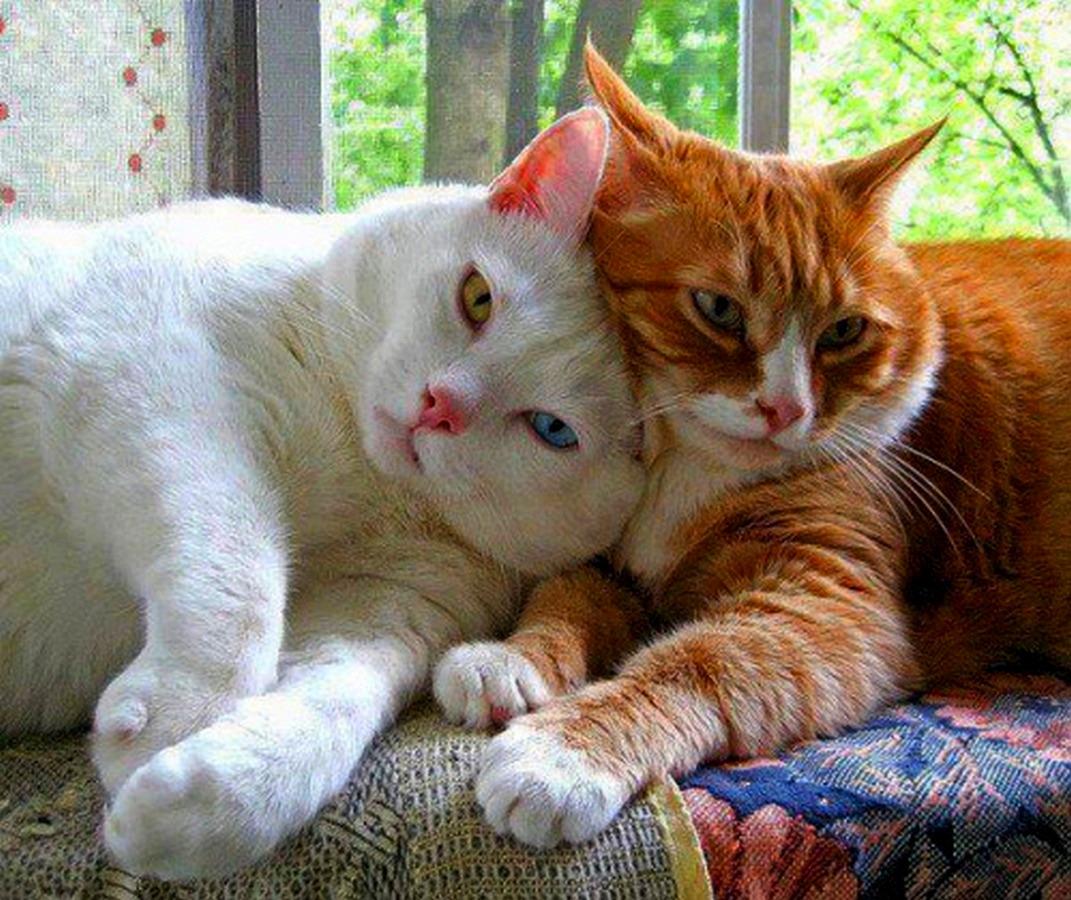 картинки с котами котятами для любимого была его музой