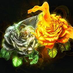 Пазл онлайн: Две розы