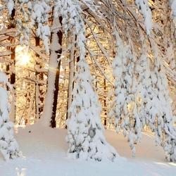 Пазл онлайн: Утро в зимнем лесу