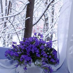 Пазл онлайн: Зимнее окно