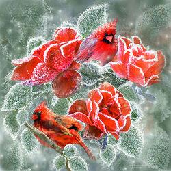 Пазл онлайн: Розы и кардиналы