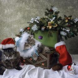 Пазл онлайн: Санта и Снегурочка