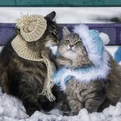Пазл онлайн: Зимнее свидание