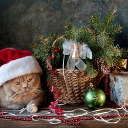 Пазл онлайн: Праздничный котонатюрморт