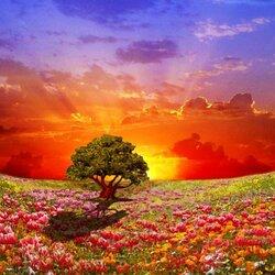 Пазл онлайн: В долине цветов