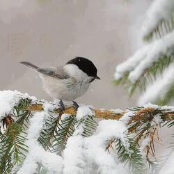 Пазл онлайн: Птичка синичка