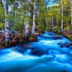 Пазл онлайн: Водный поток в березовом лесу