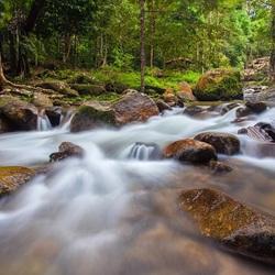 Пазл онлайн: Поток воды в лесу