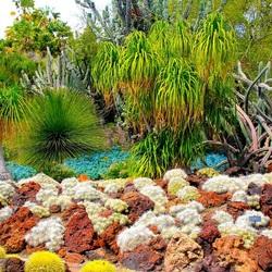 Пазл онлайн: Разнообразие кактусов