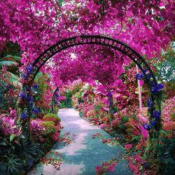 Пазл онлайн: Парк орхидей