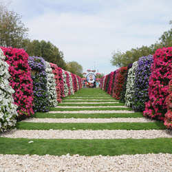 Пазл онлайн: Самый крупный в мире парк цветов