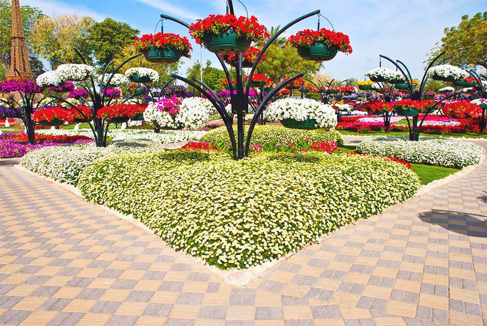 Фото городских цветочных аллей