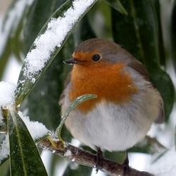 Пазл онлайн: Холодно маленькой птичке зимой