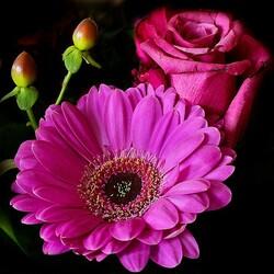 Пазл онлайн: Гербера и роза