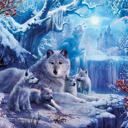 Пазл онлайн: Волки зимой