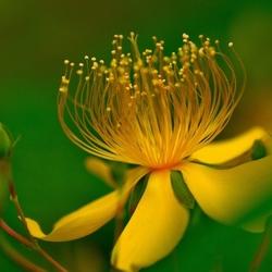 Пазл онлайн: Увидеть красоту в цветке
