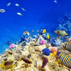 Пазл онлайн: Краски подводного мира