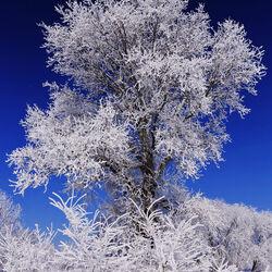 Пазл онлайн: Снежный великан