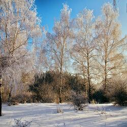Пазл онлайн: Зимний рассвет