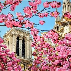Пазл онлайн: Париж весной