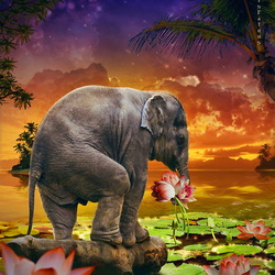 Пазл онлайн: Маленький слоненок