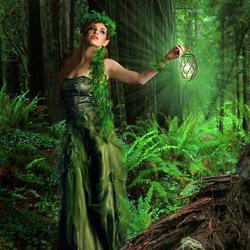 Пазл онлайн: Свет в темном лесу