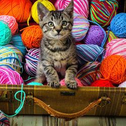 Пазл онлайн: Котенок среди клубков