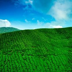 Пазл онлайн: Бархатная зеленая гора