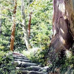 Пазл онлайн: Тропинка в лесу