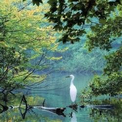 Пазл онлайн: Белая цапля на пруду