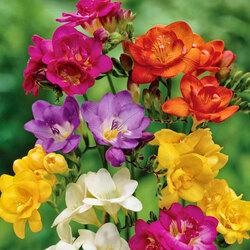 Пазл онлайн: Аромат цветов