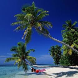 Пазл онлайн: Отдых под пальмами