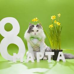 Пазл онлайн: С праздником 8 Марта!