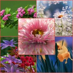 Пазл онлайн: Фотоэтюды цветов