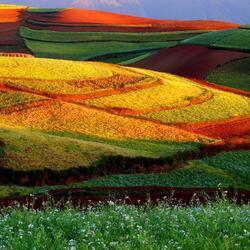 Пазл онлайн: Цветные поля
