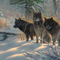 Пазл онлайн: Три волка