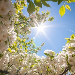 Пазл онлайн: Солнечная весна