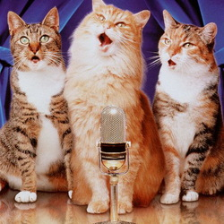 Пазл онлайн: Поющие коты