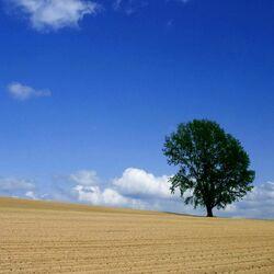 Пазл онлайн: Распаханное поле