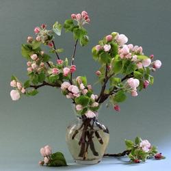Пазл онлайн: Яблоня