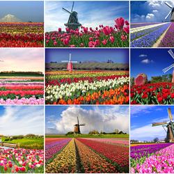 Пазл онлайн: Край тюльпанов