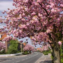 Пазл онлайн: Весна в городе