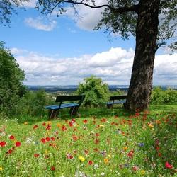 Пазл онлайн: Летние луговые цветы