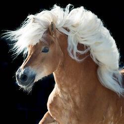 Пазл онлайн: Белогривая лошадка