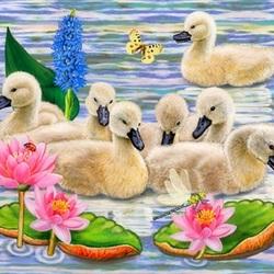 Пазл онлайн: Лебедята