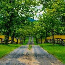 Пазл онлайн: Дорога в деревню