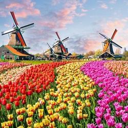Пазл онлайн: Мельницы и тюльпаны