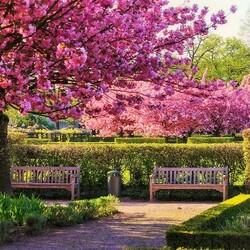 Пазл онлайн: Весенний парк
