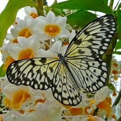 Пазл онлайн: Запах весны